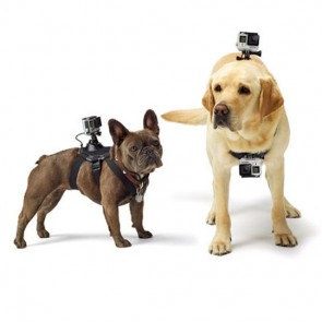 Go Pro Fetch Dog Harness
